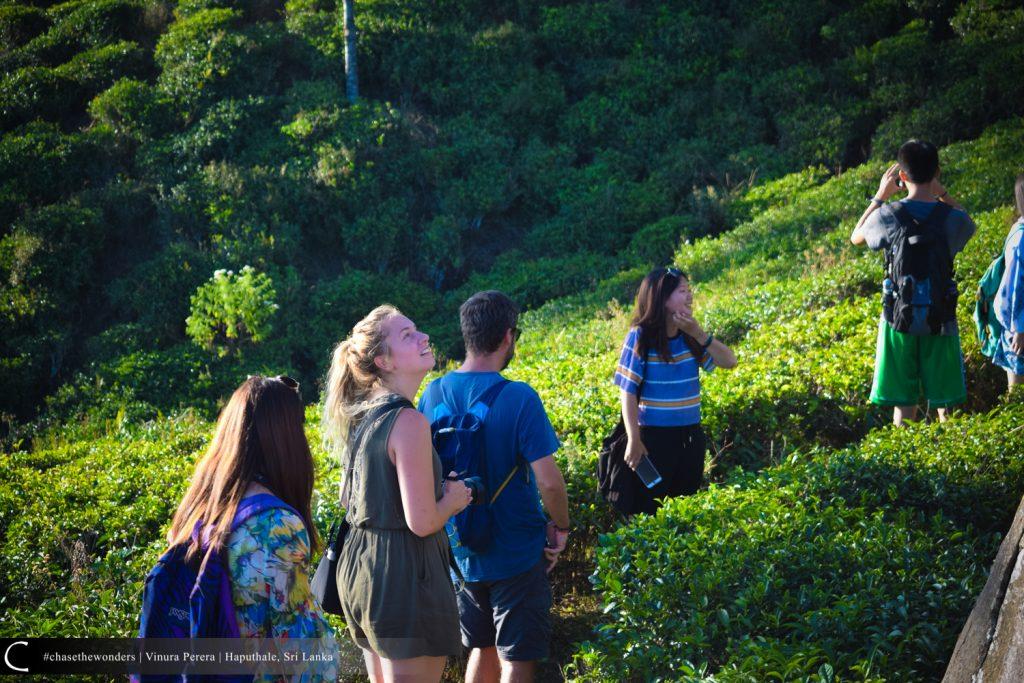 Towards Summit Through Tea Leaves