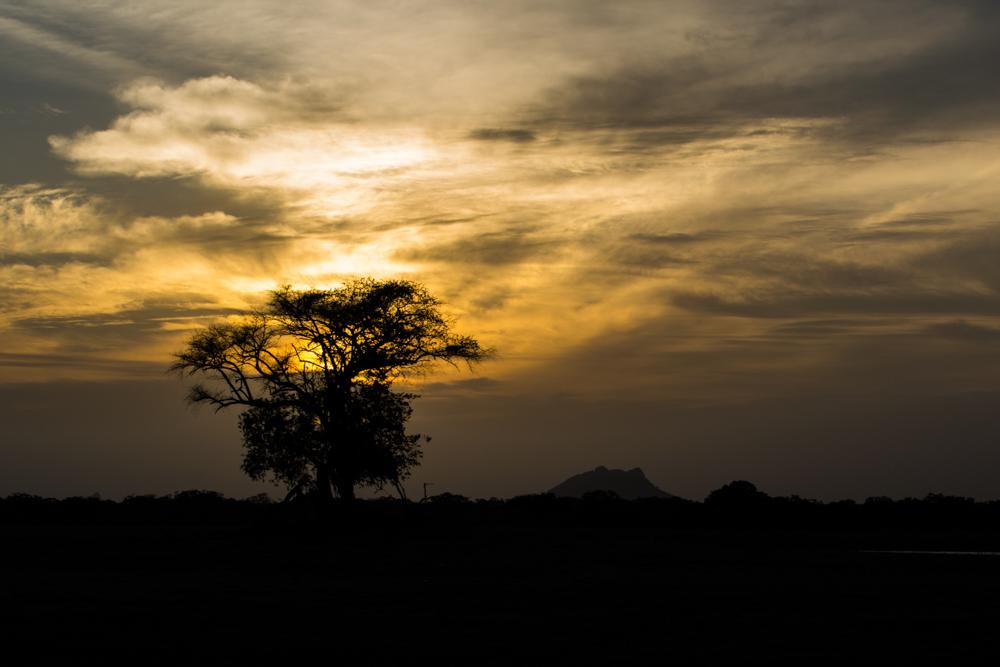 Evenings at Pada Yatra - Yala National Park